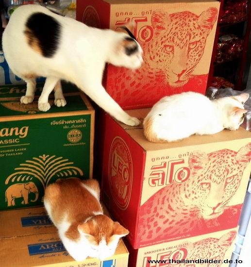 Katzen versammung