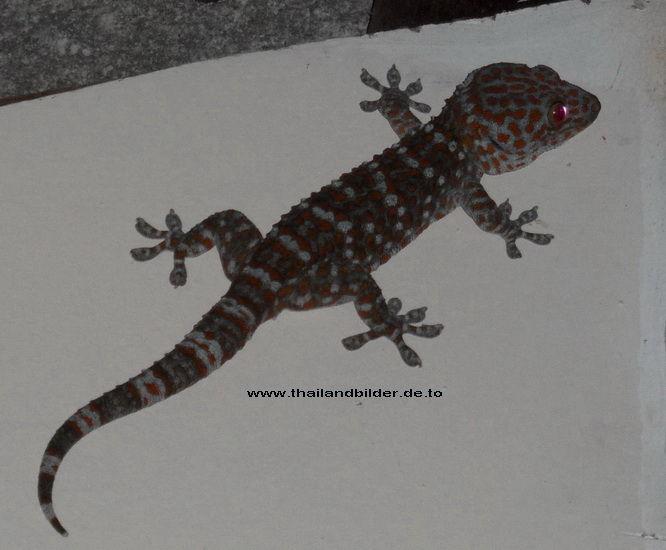 Gecko Tuggä