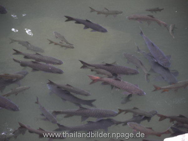 Fischbild