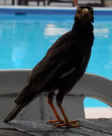 Tierbilder Vogel hält ausschau