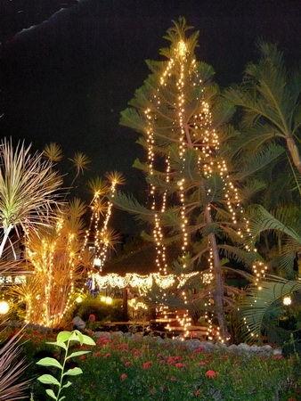 Bild Pattaya Weihnacht