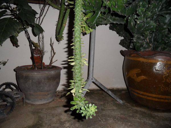 Zimmerpflanzen