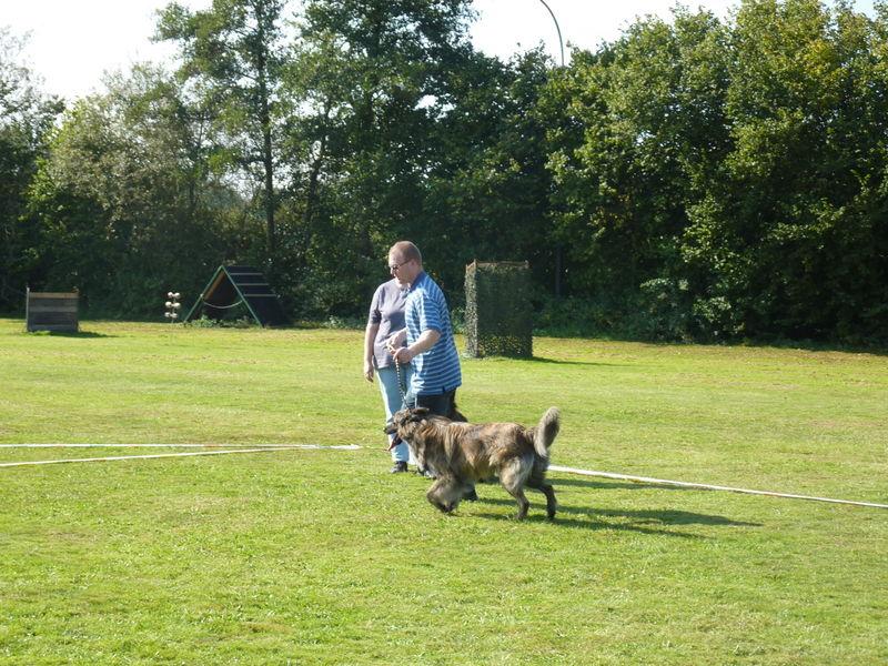 Hollaendischer Schaeferhund Hueter Des Nordens Hollandse Herder