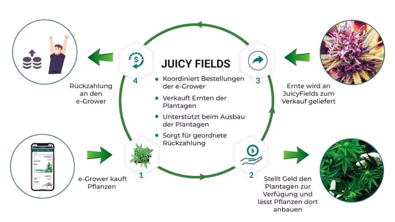 JuicyFields - So geht Crowdgrowing