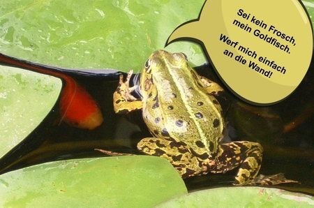 sei kein frosch froschkönig prinz bildergeschichte spruch zitat
