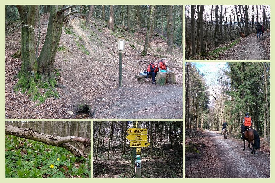 Hilter - Dütequelle - Gelbes Windröschen - Waldweg