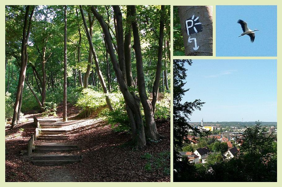 Osnabrück/Schölerberg/Panoramaweg