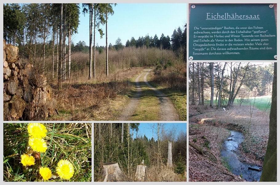 Melle/Buer: Waldlehrpfad - Glanebach
