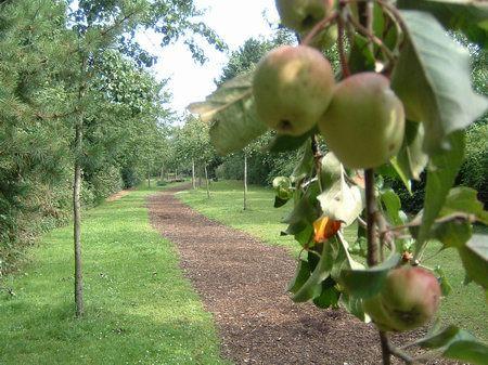 huenenweg osnabrueck obstbaumallee