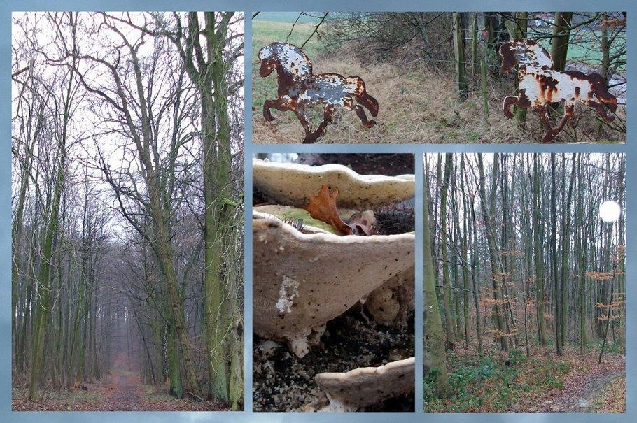 Osnabrück / Lüstringen - Zauberwald auf dem Lüstringer Berg