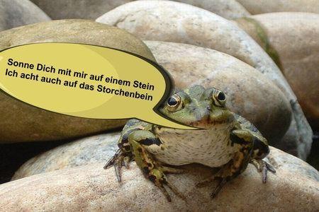 froschkönig prinz bildergeschichte spruch zitat frosch stein storchenbein