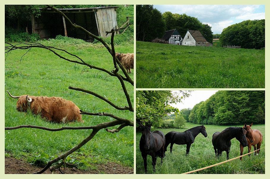 Bissendorf - Zittertal - Rinder - Pferde