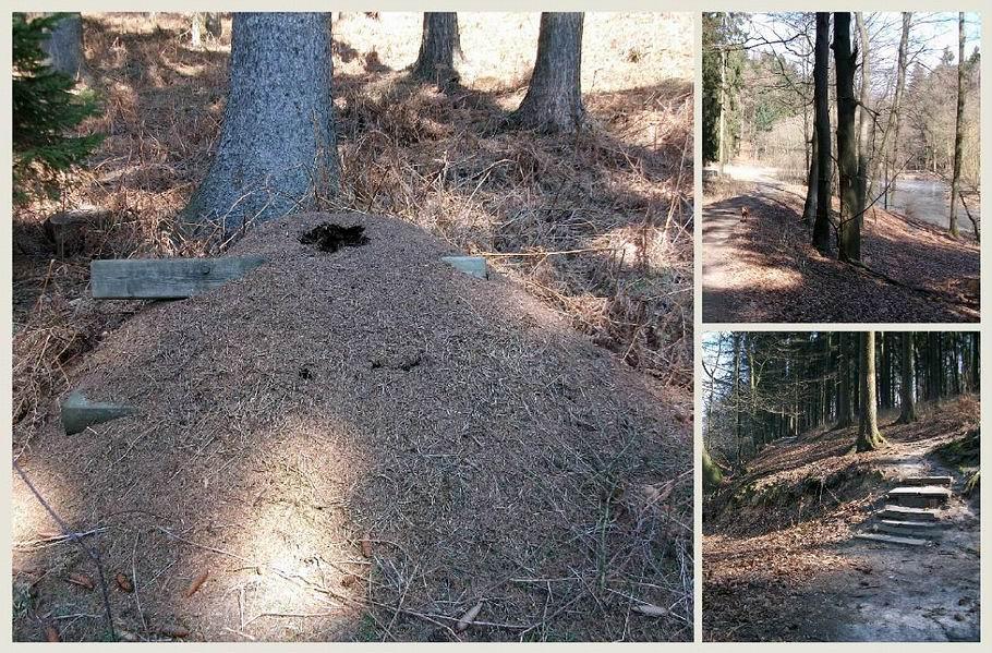 Ameisenstaaten im Wiehenhorst bei Bad Essen