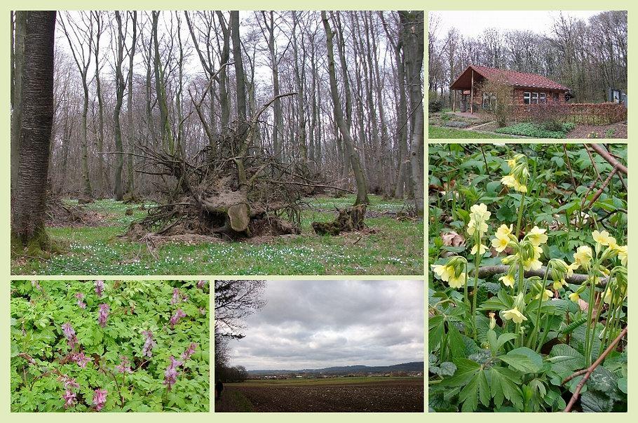 Bad Laer - Blomberg - Frühlingsblüher - Bienenlehrstand