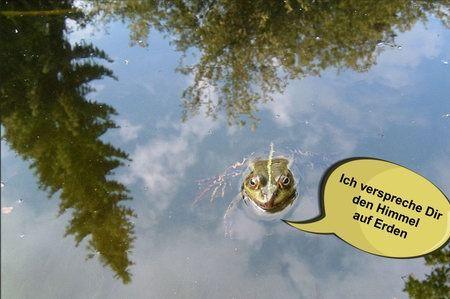 froschkönig prinz bildergeschichte spruch zitat ich verspreche dir den himmel auf erden frosch