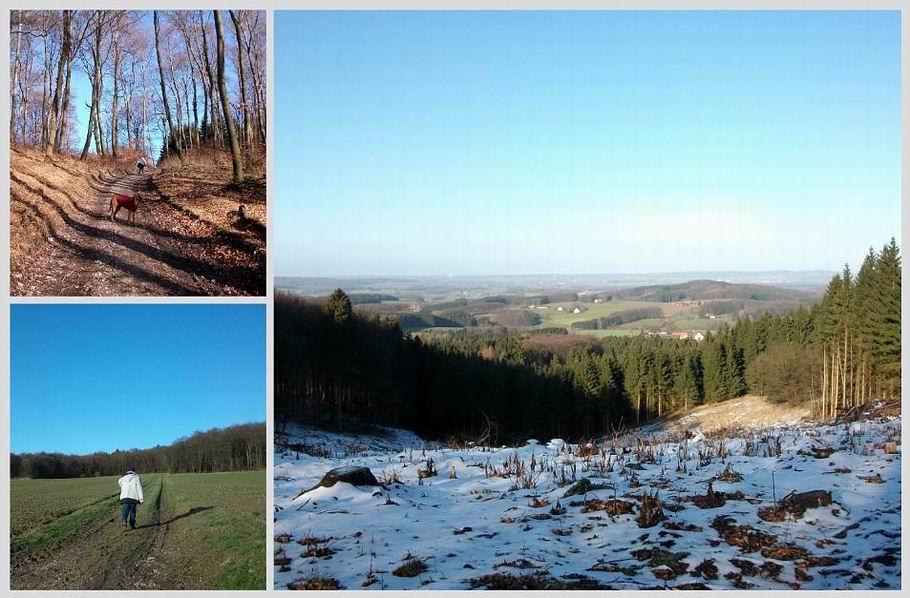 Blick vom Hermannsweg auf den Beutling bei Wellingholzhausen