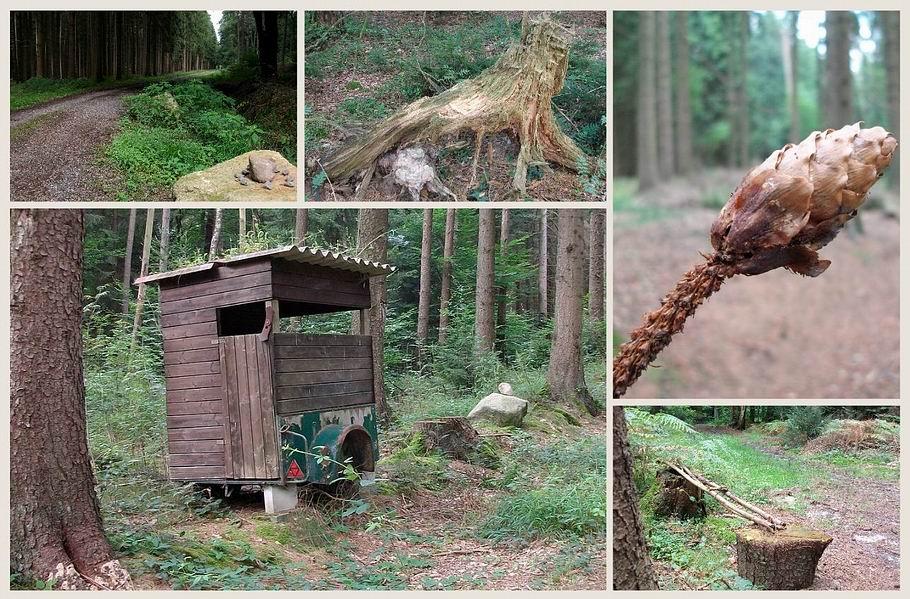 """""""Waldskulpturen"""""""