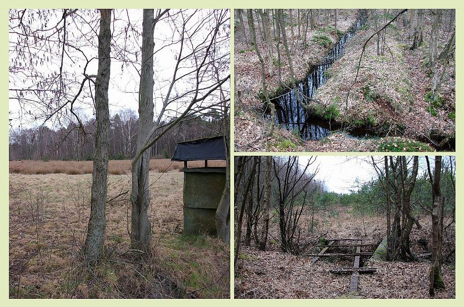 Venner Moor (Ostercappeln) - alte Torfstiche - Binsengebiet - Lorenschienen
