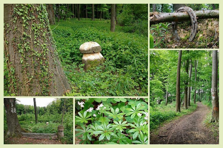 Bissendorf - Zittertal - im Wald