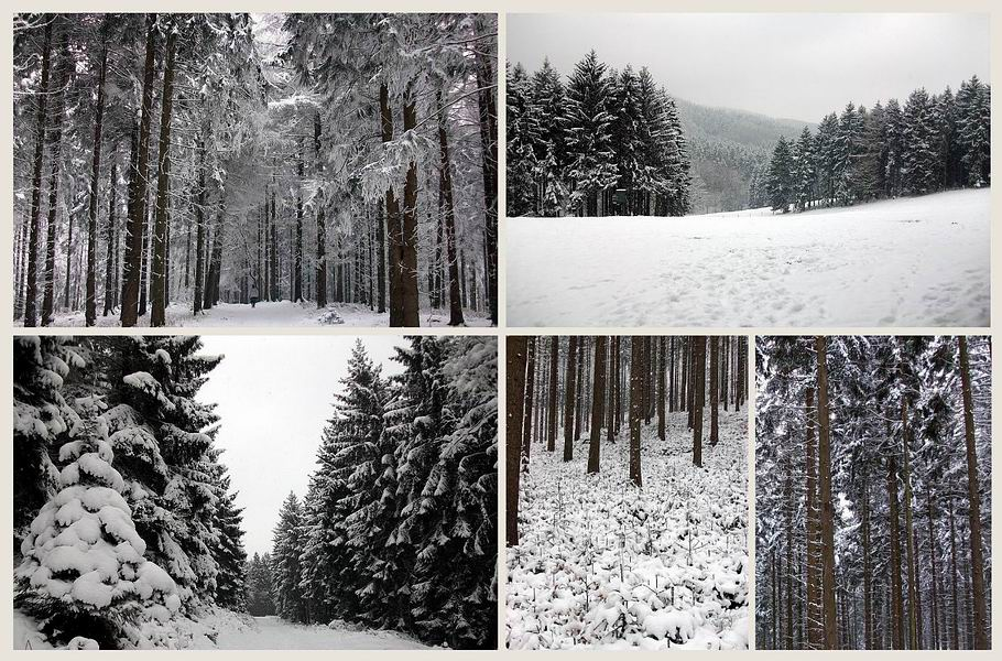 Winterzauberwald bei Georgsmarienhütte im Teutoburger Wald