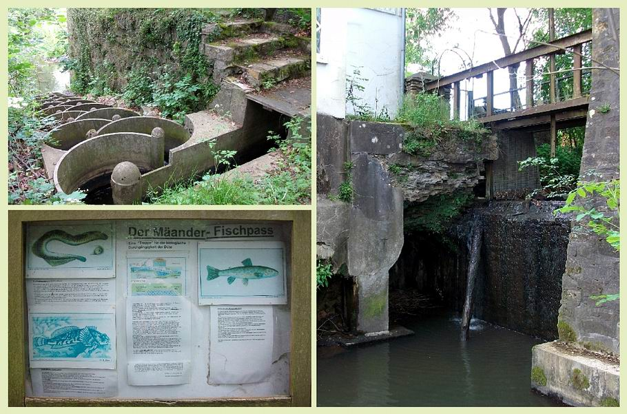 Fischtreppe an der Düte in Kloster Oesede