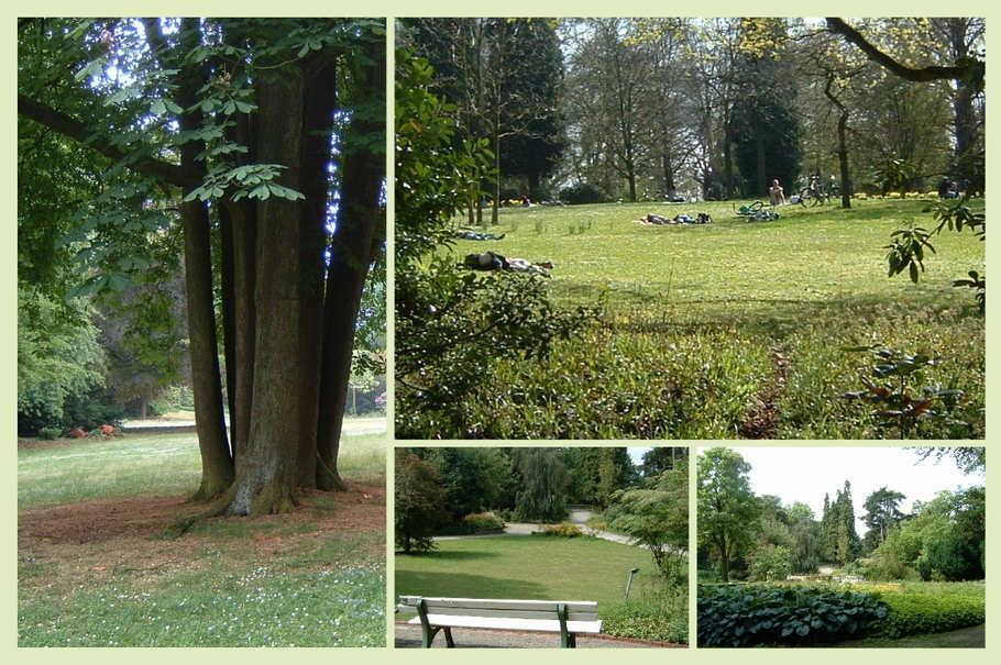 Bürgerpark Osnabrück Sommer