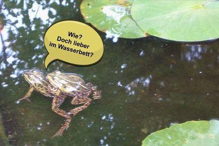 froschkönig prinz bildergeschichte spruch zitat frosch wasserbett
