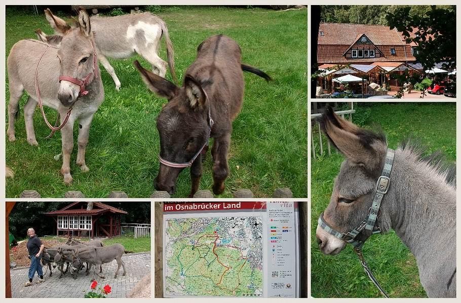 Georgsmarienhütte - Waldrestaurant Schützenhaus - Eselgruppe