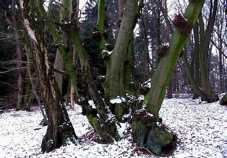 Niederwaldrelekte Bad Essen/Wehrendorf