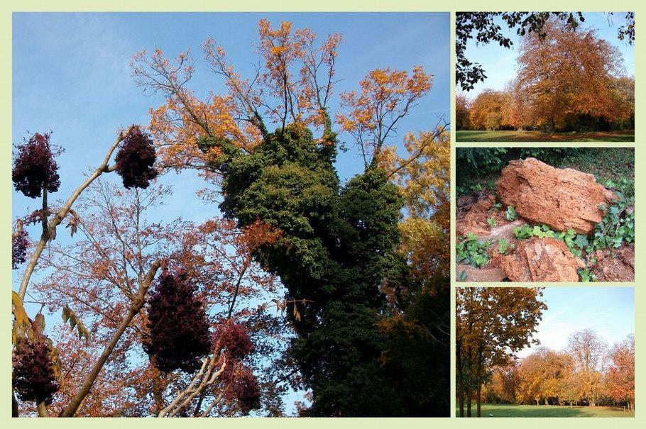 Bürgerpark Osnabrück Herbst