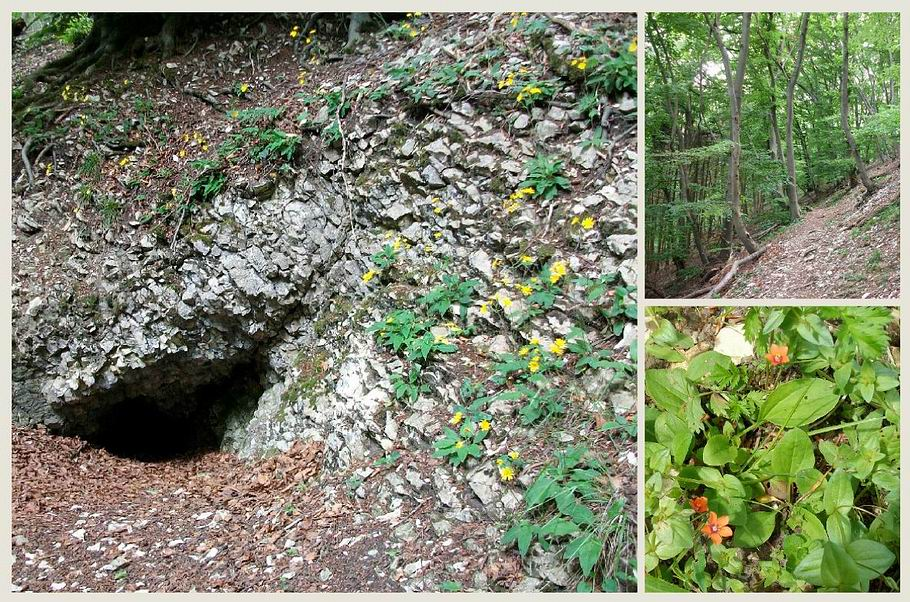 Borgholzhausen - Pfaffenkammer (Höhle)