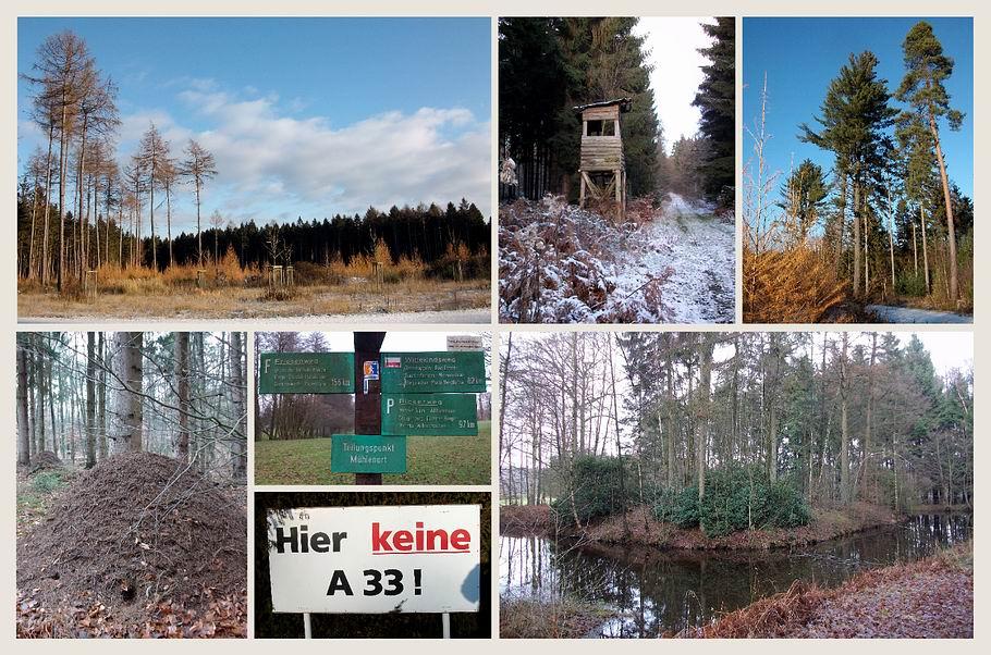 """Wallenhorst / """"Wittekindsburg"""" beim Mühlenort, Ameisenhaufen, Hier keine A33"""