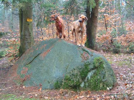 rundwanderwege wandern osnabrück hund osnabrücker land bissendorfer burgenweg schledehausen oberheide opferstein osnabrücker land