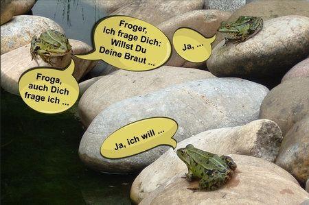 froschhochzeit im teich - bildergeschichte