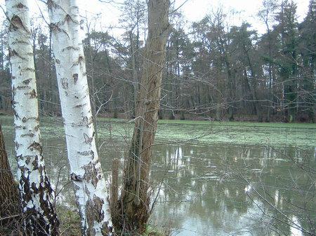 hase überschwemmung tauwetter ledenburg