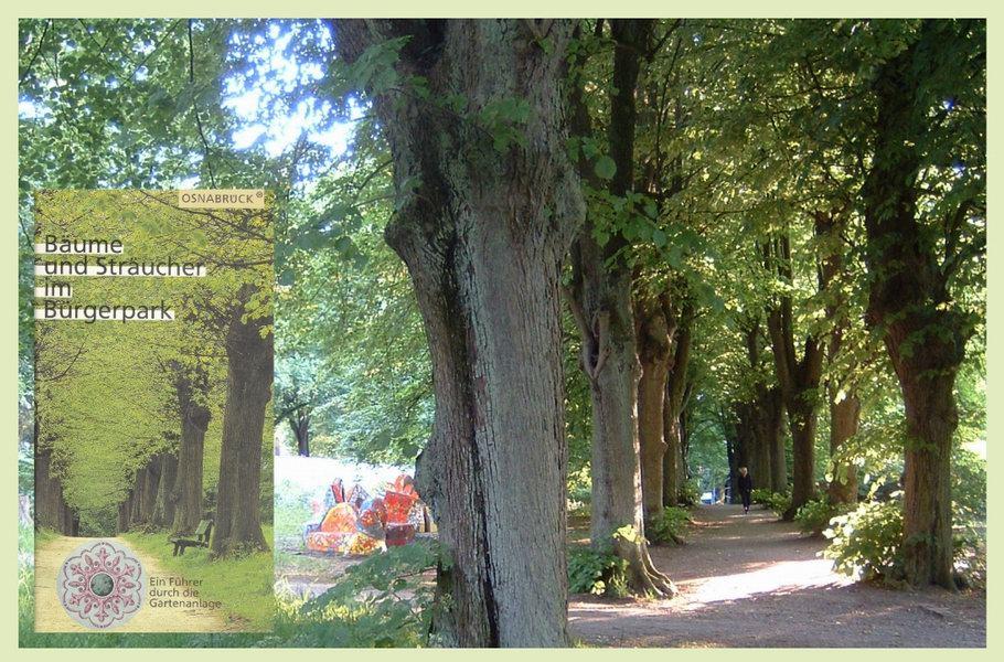 Bürgerpark Osnabrück - Bäume und Sträucher