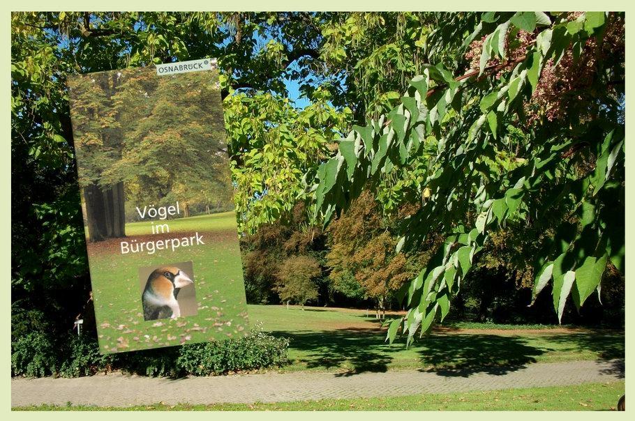 Bürgerpark Osnabrück - Vögel im Bürgerpark