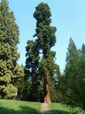 arboretum piesberg mammutbaum osnabrueck wandern