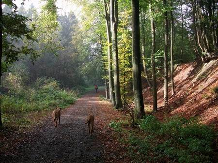 Rödinghausen Wanderweg zum Nonnenstein