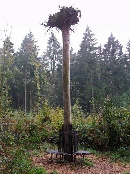 Rödinghausen Wanderweg zum Nonnenstein Baum mit Wurzeln zum Himmel
