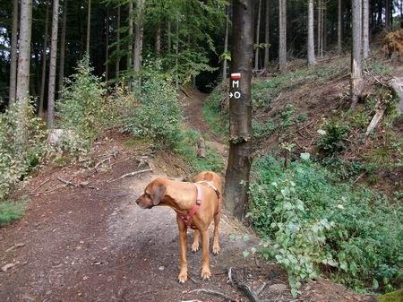 Rödinghausen Wanderung zum Grünen See idyllischer Pfad