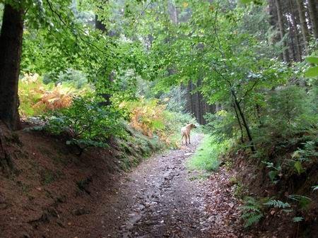 Rödinghausen Wanderung zum Grünen See Herbst