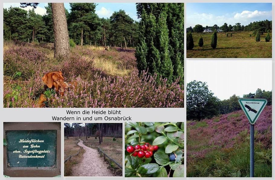 Wandern in und um Osnabrück - Heidelandschaften - Willkommenscollage 3