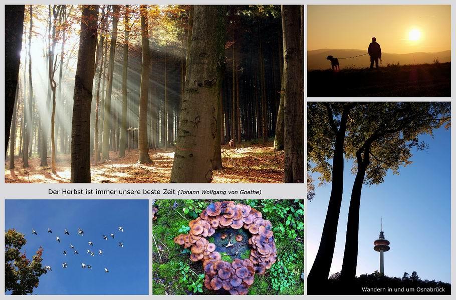 Goldener Herbst in der Osnabrücker Gegend