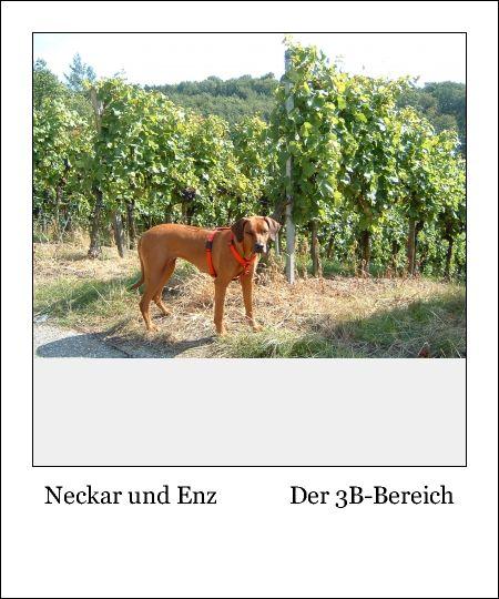 Neckar und Enz