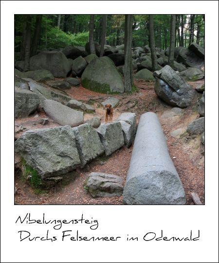 Nibelungensteig / Durchs Felsenmeer im Odenwald
