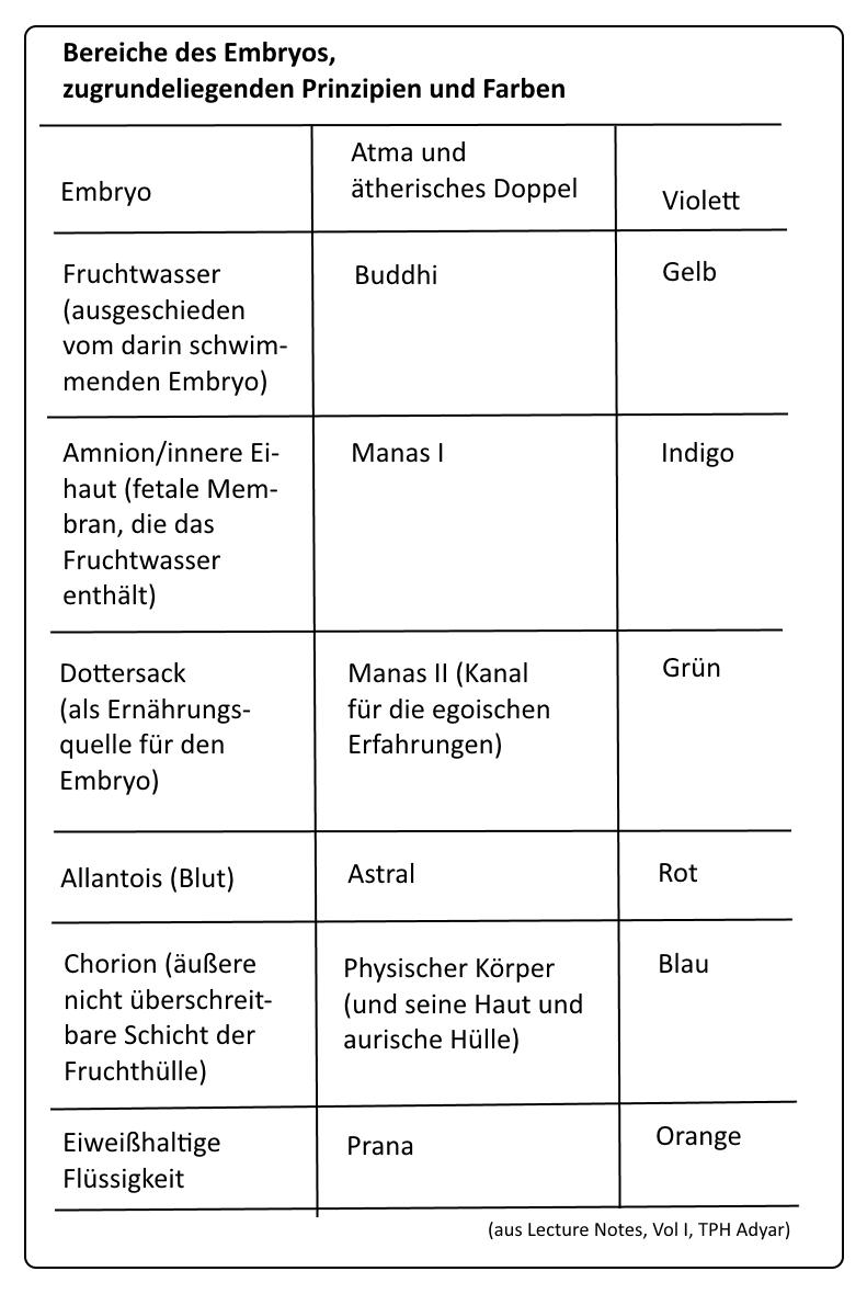 Gemütlich Weiblich Innen Anatomie Ideen - Anatomie Ideen - finotti.info