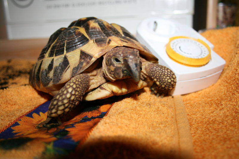fressen von schildkröten im winter