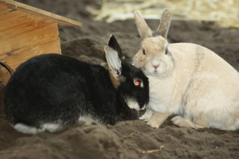 Kaninchen-Shop