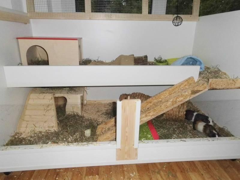 ratgeber f r meerschweinchen haltung. Black Bedroom Furniture Sets. Home Design Ideas